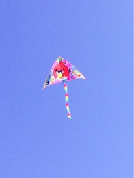 This Angry Birds kite loved to fly
